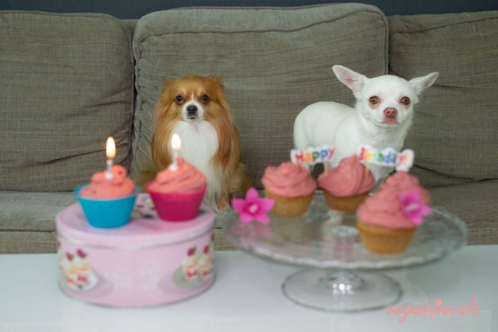Easy Healthy Vegan Pupcakes (Dog-Friendly Cupcakes)